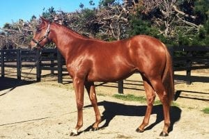 White Robe lead the way at southern sale