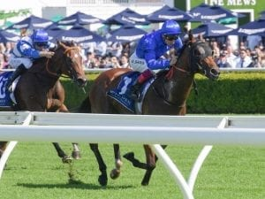 Bivouac lands consolation win at Randwick