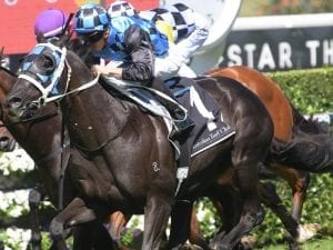 Ringerdingding steps up in Carbine Club