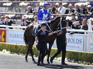 Winx makes guest appearance at Randwick
