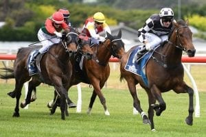 Stakes double would be 'Sinsational' for Sharrock