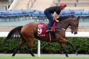 Kennewell upbeat as Viddora gets ready for Chairman's Sprint Prize