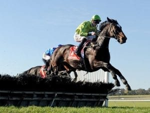 Self Sense back over hurdles in Galleywood