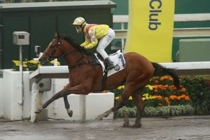Tsui aiming for double delight on dirt with Winner Supreme