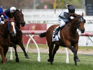 Boom or bust for Caulfield Cup winner