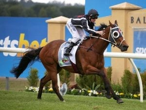 Jungle Edge to show his best at Caulfield