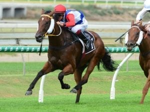 Mishani to hustle for Les Ross at Doomben