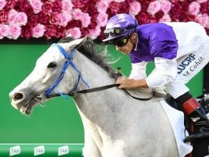 Popular grey The Candy Man wins Group 3