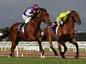 Steel Prince wins again, goes for Ramsden