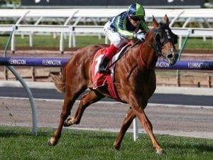 Sebrakate returns with easy Flemington win