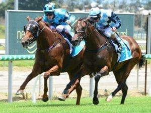 Qld mare Acqume to run at York