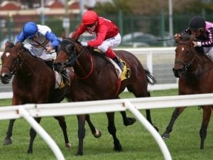 Iconoclasm in top order ahead of Goodwood