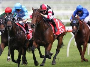 Missrock sells for $2.3m at broodmare sale
