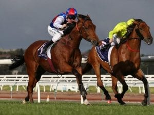 Oliver to ride Steel Prince in Ramsden