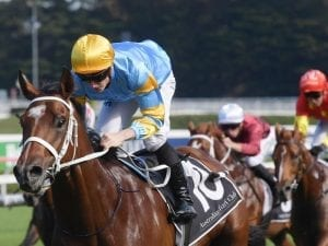 Reloaded to run at Randwick before Atkins