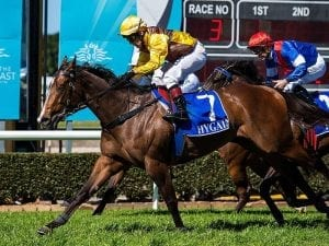 Mare to strut her stuff at the Gold Coast