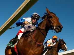 The Bostonian wins G1 Kingsford Smith Cup
