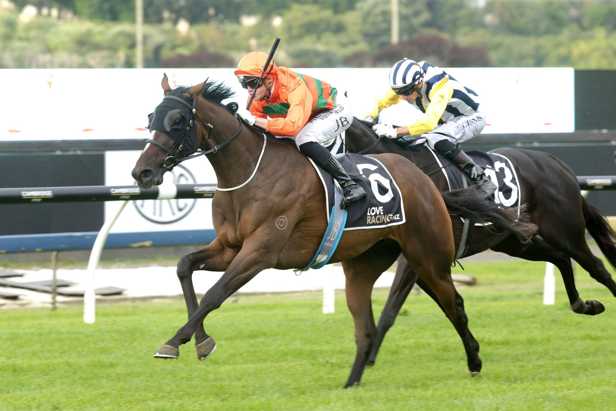 50336a1be58 Group One Queensland Derby prospect Lord Arthur wins the Gr.2 Championship  Stakes at Ellerslie last month Photo Credit: Trish Dunell