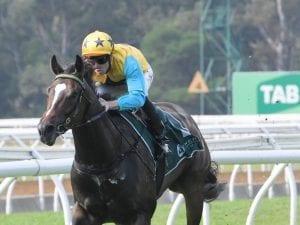 Diamond Thunder on trial for Brisbane trip