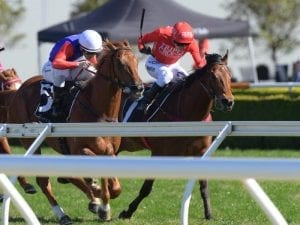 Military Zone chasing another Guineas win