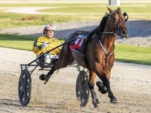 Champion reinsman on brink of milestone