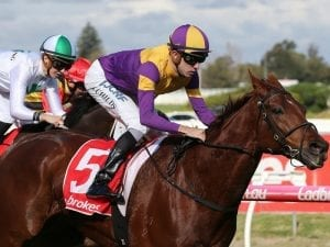 Guizot out to add another Caulfield win