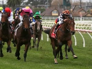 The Astrologist chasing winning hat-trick