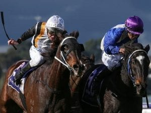 Chouxting The Mob wins again at Flemington