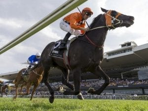Ace High to stand at New Zealand stud