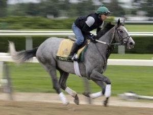 Tacitus favourite for Belmont Stakes