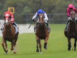 First stakes test for Bon Amis at Randwick