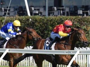Enforcement stamps his class at Rosehill
