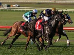 Moroney imports impress in Sandown wins