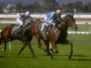 Relaxed Marcel From Madrid up for Sandown