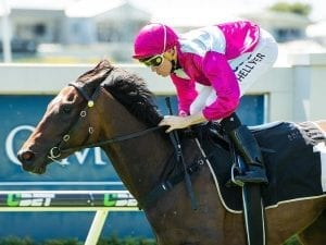Baccarat Baby too tough in Guineas