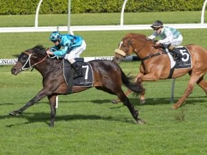 Sesar favourite to win Group 3 Bletchingly