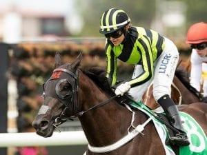 Meagher stable set for divine result