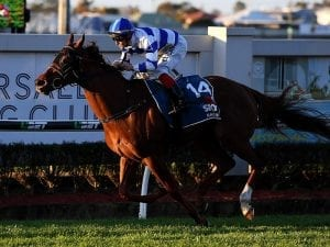 Conditions fit Birchley-trained gelding