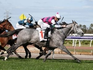 Fidelia to be aimed at Group 1 race in spring
