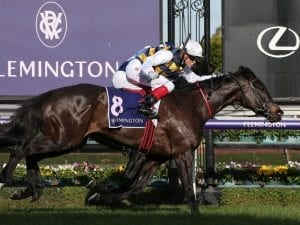 Cumani thinks Future is bright for stayer