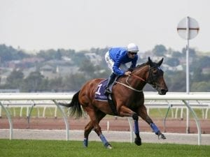 High profile horses to trial at Randwick