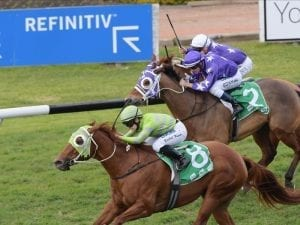 Foxy Housewife adds Rosehill win to record