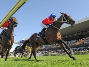 Invincible Gem after second Missile Stakes