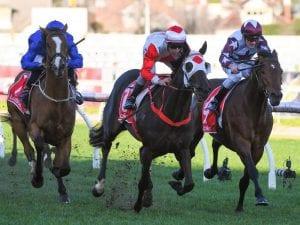 Australian Horse Racing, Online Betting & Tips