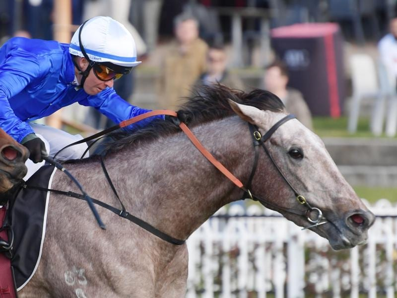 Subedar will contest the Dulcify Stakes at Rosehill.