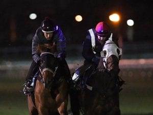 Bowman with chance at Guineas double