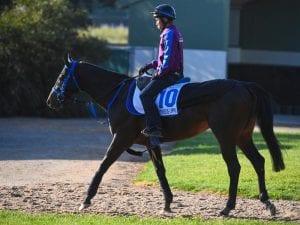 Suzuka Devious shoots for Caulfield Stakes