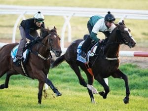 Constantinople on song for Caulfield Cup