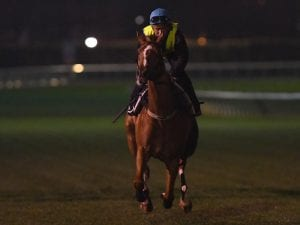 Finche gets look at Caulfield ahead of Cup