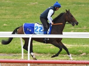 Danceteria on song for Caulfield Stakes